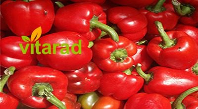 Red bell pepper for export