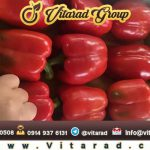 export red bell pepper from iran