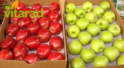 Iranian yellow tree apple for sale - price fruit Persian Pomegranate Trees For Sale