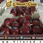 sell red apples to russian buyers