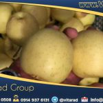 iranian yellow apple for export
