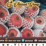 Saveh pomegranate for sale