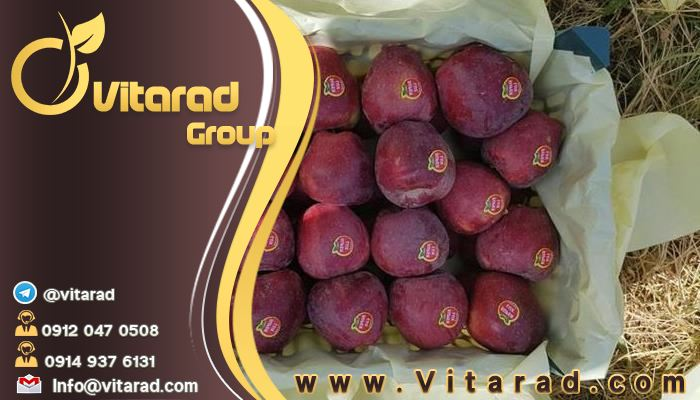 Buy red apples from iran