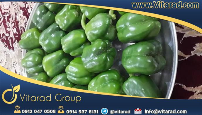 Iranian bell pepper production